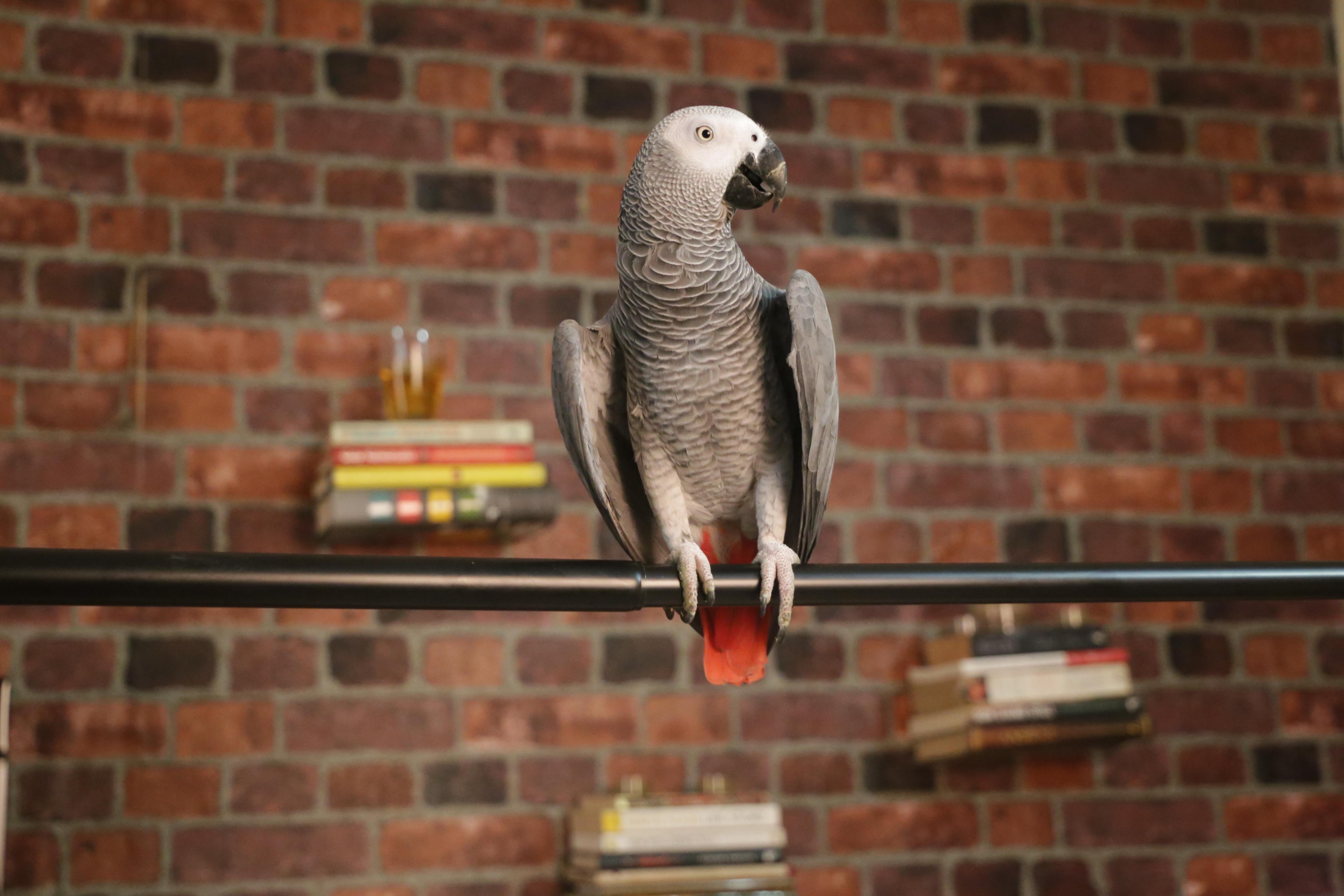 6 social lessons my parrot, Zizu, has taught me