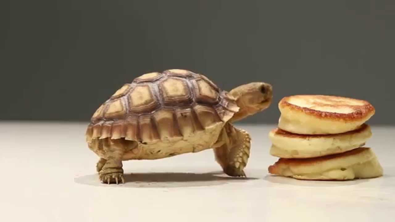 What spending a year's savings on a tortoise has taught me about finances
